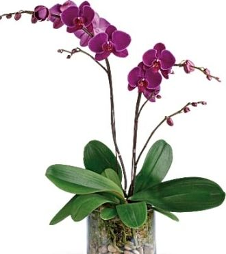 GloriousGratitude Orchid Delivery