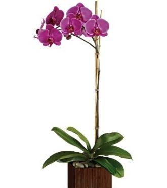 TeleflorasSublime Orchids Delivery 1