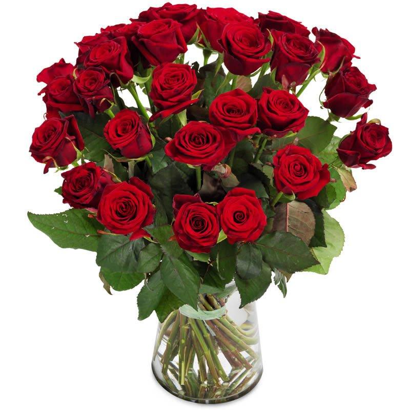 Red Roses Send Roses